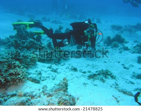 Diver on the coral reef in the red sea