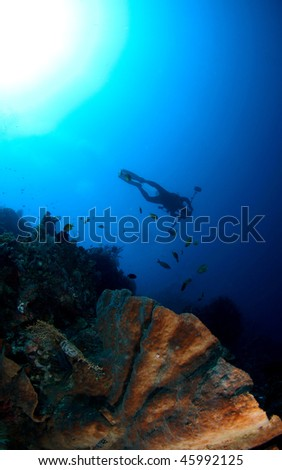 diver's silhouette with hard corals view at Menjangan Island, Bali, Indonesia.