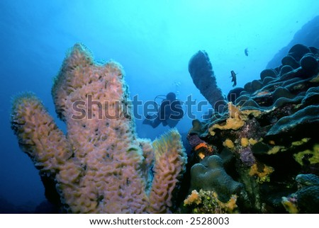 Diver Silhouetted Over Azure Vase Sponge Stock Photo Royalty Free