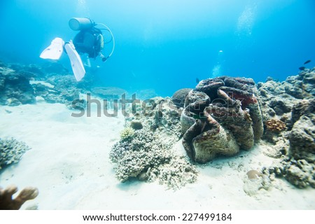 diver swimming around giant clam - stock photo