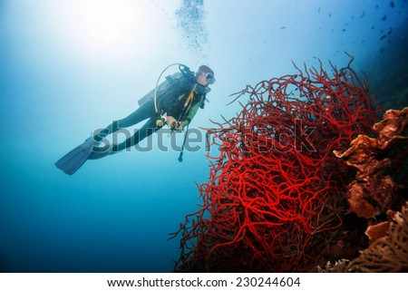 Diver swimming around the giant red coral - stock photo