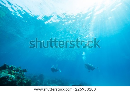 diver swimming in school of jack fish