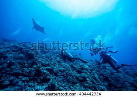 Diver swimming with manta ray - stock photo