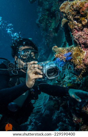 Diver taking picture of tunicates in Derawan, Kalimantan, Indonesia underwater photo. These are Clavelina tunicates species. - stock photo