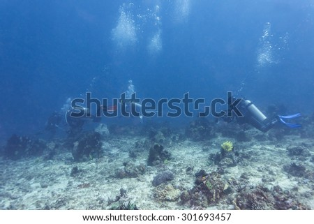 Diver underwater passing through coral reef.