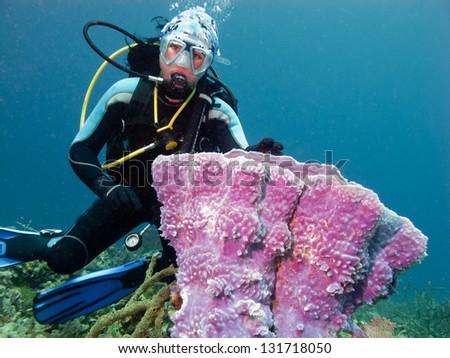diver with big sponge - stock photo