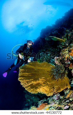Diver with camera in deep. underwater photographer, Asia
