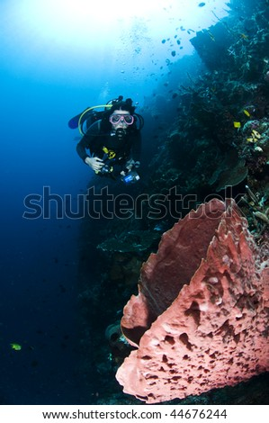 Diver with camera in deep. underwater photographer, Lembeh, Asia