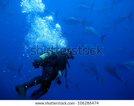 Diver with Tuna in the background
