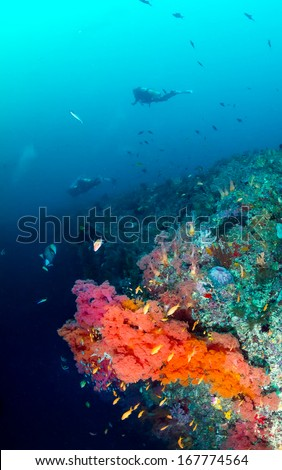 Divers and colorful soft corals on a deep underwater wall - stock photo
