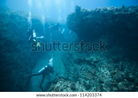 divers and hard coral