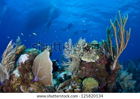 Divers explore a diverse coral reef in Grand Cayman.  This island in the Caribbean is well known for its fantastic scuba diving and white sand beaches. - stock photo