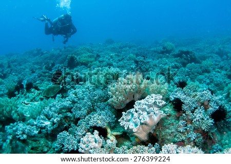 Divers underwater. - stock photo