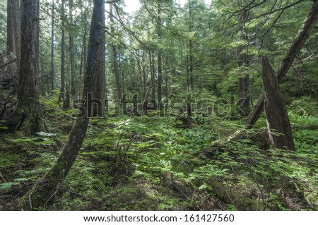 Diverse vegetation in pine forest near Sitka on Baranof Island in southeast Alaska - stock photo