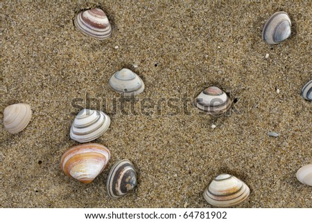Diversity of shells in sand from a north sea beach in Scheveningen, the Netherlands - stock photo