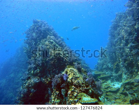 diving at the coral reef of Richelieu Rock & Similan Islands,Thailand - stock photo