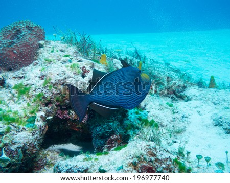 Diving off Isla Mujeres , cancun, mexico - stock photo
