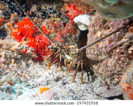 Diving on a Coral reef off mexico - stock photo