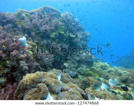 diving the coral reef of Richelieu Rock & Similan Islands,Thailand - stock photo