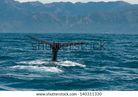 diving whale - stock photo