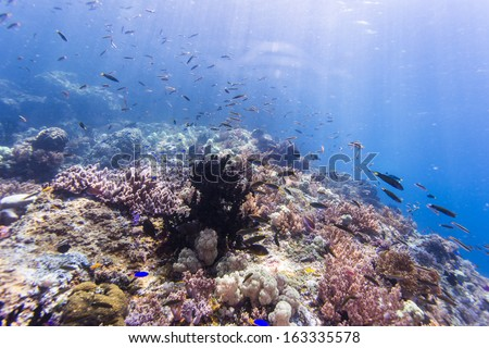 diving with colorful soft coral