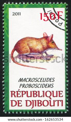 DJIBOUTI - CIRCA 2011: stamp printed by Djibouti, shows Short-eared elephant shrew, circa 2011 - stock photo
