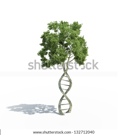 DNA shaped tree with trunks forming the double helix - stock photo