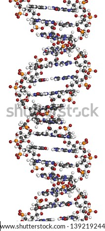 DNA structure. Computer model of part of the gene for human growth hormone, shown in the B-DNA form. Atoms are represented as spheres with conventional color coding - stock photo
