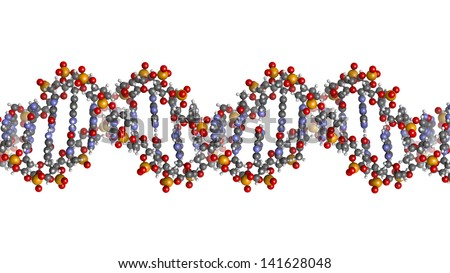 DNA structure. Computer model of part of the gene for human growth hormone, shown in the B-DNA form. Atoms are represented as spheres with conventional color coding: hydrogen (white), etc - stock photo