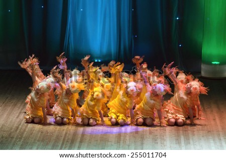 DNIPROPETROVSK, UKRAINE - FEBRUARY 8: Unidentified children, ages 5-7 years old, perform CHICKEN on February 8, 2015 in Dnipropetrovsk, Ukraine - stock photo