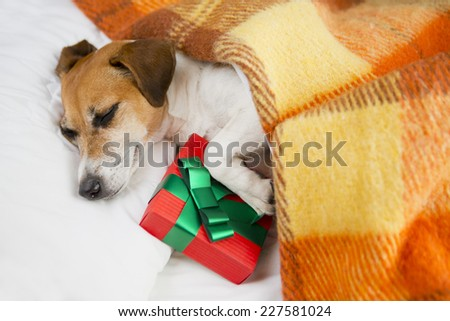 Do not open until Christmas. Present box gift with dog. Sleeping cozy pet  under a blanket on the pillow. In anticipation of the holiday.  - stock photo