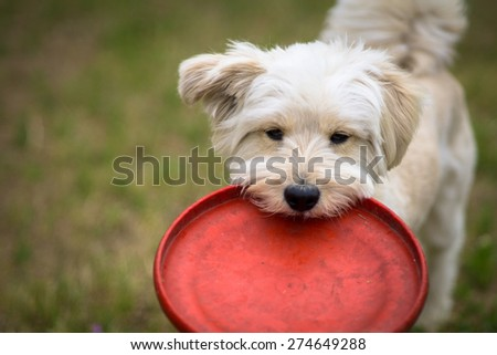 Do you wanna play? - stock photo