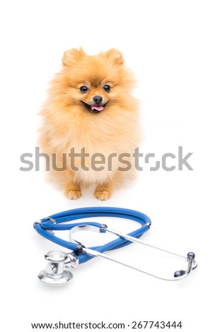 Doctor dog - stock photo