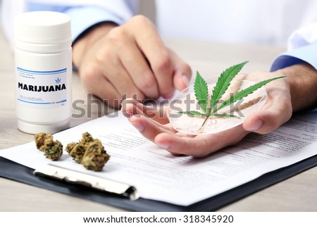 Doctor hand holding green cannabis leaf close up - stock photo
