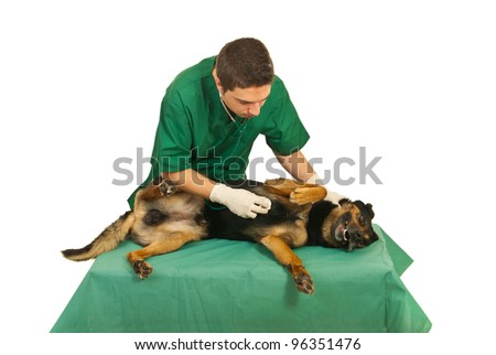 Doctor vet examine dog with stethoscope on a table in his office - stock photo