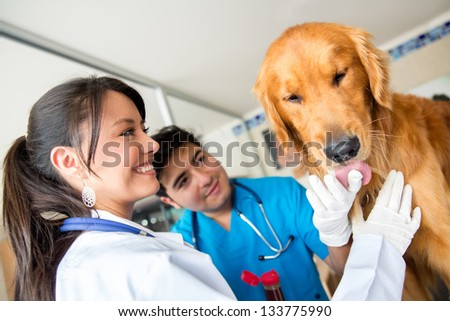 Doctors checking a friendly dog at the vet - stock photo