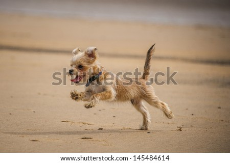 Dog jumping Stock Photos, Illustrations, and Vector Art