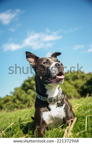Dog  - stock photo