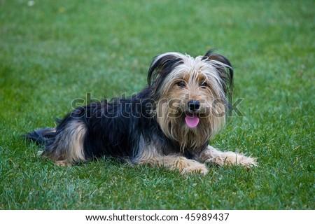 dog 4 - stock photo