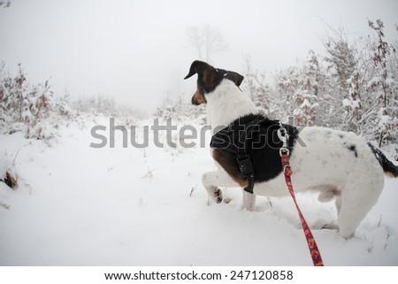 Dog adventure, exploring first snow - stock photo