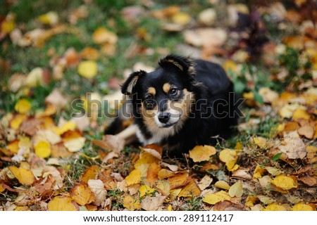 dog against the backdrop of autumn foliage