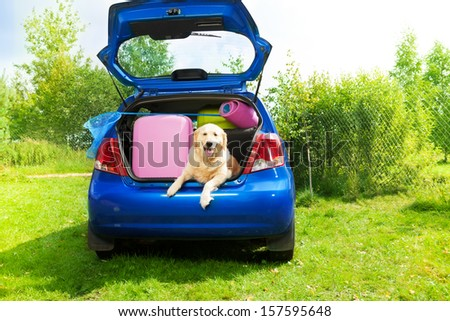 Dog and bags and other luggage in the trunk of the car on the back yard ready to go for vacation - stock photo