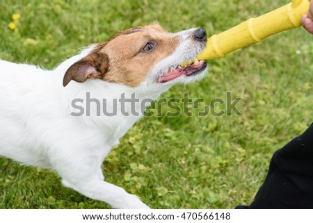 Dog and boy playing with yellow toy rubber stick