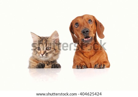 Dog and Cat above white banner looking at camera - stock photo