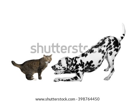 Dog and cat are playing together - stock photo