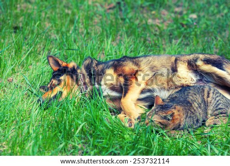 Dog and cat best friends lying on the grass together. - stock photo
