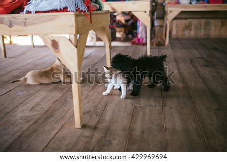 Dog and cat best friends playing together on the wood floor. One black dog, one brown dog and one cat. Indoor photography. - stock photo