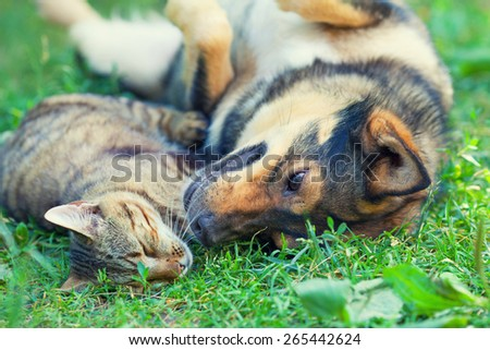 Dog and cat best friends playing together outdoors, lying on the grass - stock photo