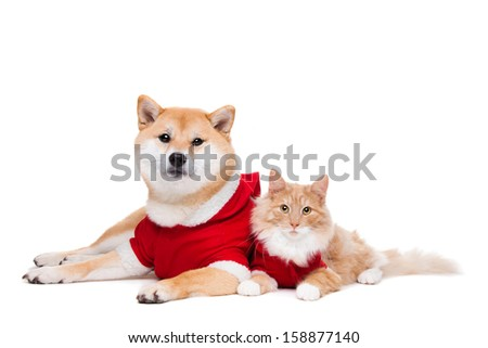 Dog and Cat dressed in Christmas clothes in front of a white background - stock photo