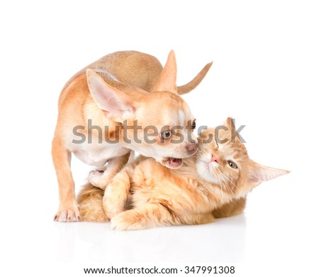 dog and cat fight. isolated on white background - stock photo